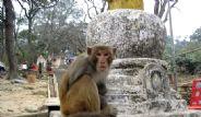 Maymuna Tapıyorlar