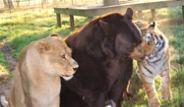Hayvanlar Aleminden Şaşırtıcı Dostluklar