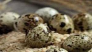 Bu Yumurta Her Derde Deva