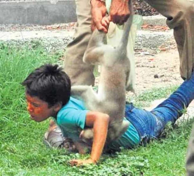 Hayvanat Bahçesinde Maymun Saldırısı