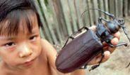 Etle Beslenen Dev Böcek: Titan