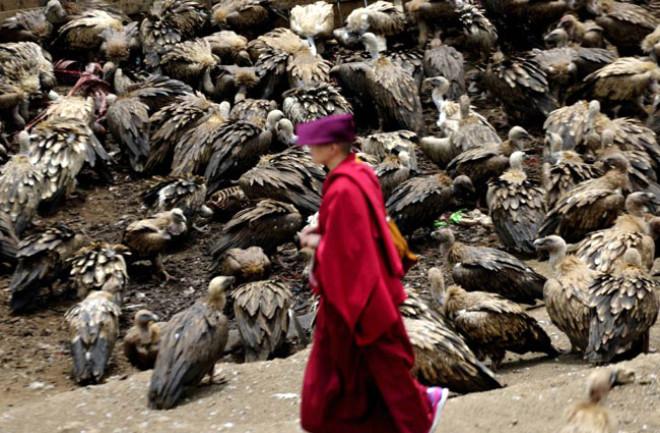 Vajrayna Budistleri Cesetleri Akbabalara Yediriyor