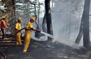 Bolu'da 10 Hektarlık Orman Kül Oldu