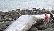 Hollanda'da Dev Balina Sahile Vurdu
