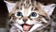 Dünyaya Kedilerin Gözünden Bakış
