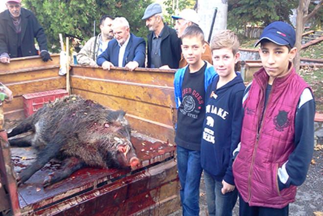 Çeyrek Tonluk Yaban Domuzu Avladılar
