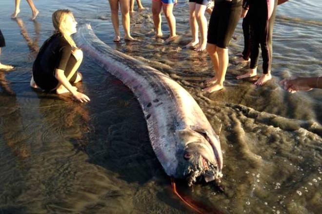 Amerika'da Kıyıya Vuran Oarfish Balığı Görenleri Korkuttu