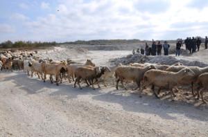 Keçili, Koyunlu, İnekli Taş Ocağı Tepkisi