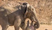 Fil İle Anne Su Aygırı Kavgaya Tutuştu