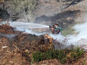 Dondurucu Soğukta 50 Hektar Kızılçam Ormanı Yandı