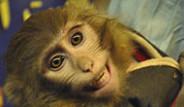 İran, Uzaya Maymun Gönderdi
