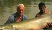 Yılda Bir Kez Avlanmasına İzin Verilen Dev Balıklar