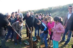 İzmit Belediyesi 110 Adet Sedir Ağacı Fidanı Dikti