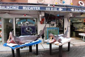 Marmara'da Yakalanan Pamuk Köpek Balığı Çocukların İlgi Odağı Oldu