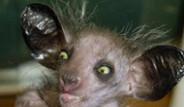 Hiç Bilinmeyen 'Tuhaf' Hayvanlar