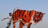 Hindistan'da 'Uçurtma' Festivali