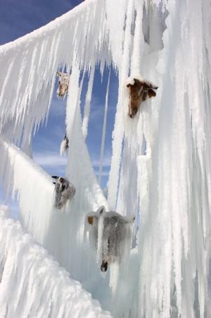 Buzda Kesik Hayvan Başı Görenleri Şaşırttı