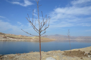 Kocasinan, Sahil Yolunu Ağaçlandırıyor