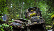 1500 Araç 66 Yıldır Ormanda Bulunuyor