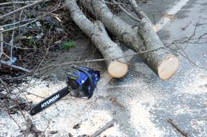 Yolcu Minibüsünün Üzerine Ağaç Düştü, 2 Kardeş Yaralandı