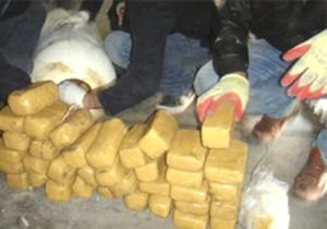 Sivas'ta 31 Kilo Esrar Ele Geçirildi