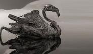 Tanzanya'daki Göle Dokunan Taş Kesiliyor
