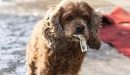 Dünyanın En Akıllı Köpeği Boby