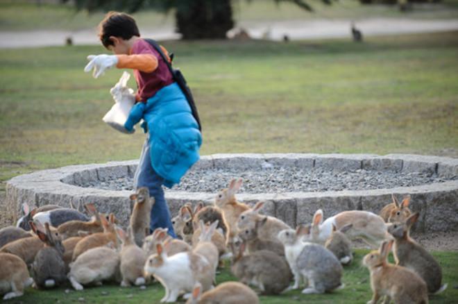 Sadece Tavşanların Yaşadığı Adadan Şaşırtan Manzaralar