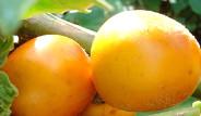 Daha Önce Adını Hiç Duymadığınız Meyve ve Sebzeler