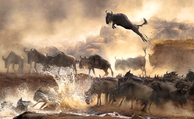 Sony Dünya Fotoğraf Ödülleri 2014'ün Kazananları