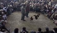 Afganistan'da Halk Horoz Dövüşünü Dikkatle Takip Etti