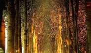 Rahatlamanızı Sağlayacak Huzur Verici Tüneller