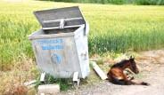 Osmaniye'de Yaralı Hayvanı Çöpe Attılar