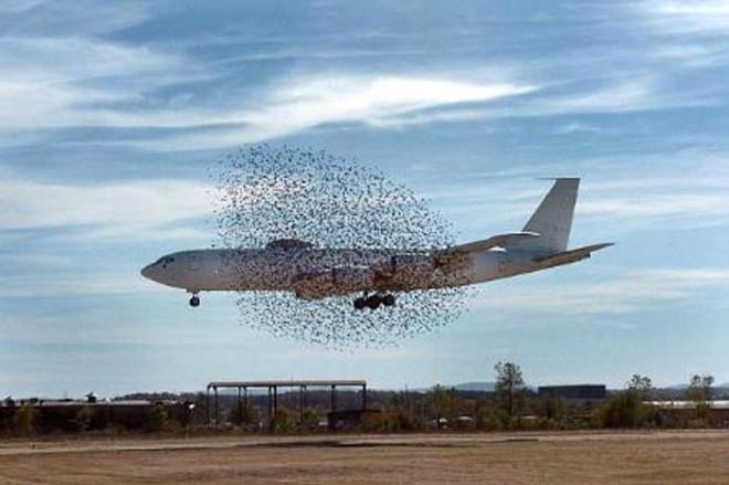 Uçak Kuş Sürüsüne Çarparsa Ne Olur?