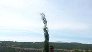 Karaburun Yarımadası, Artık Yeşilburun Yarımadası