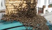 Arılar Londra Sokaklarını İşgal Etti