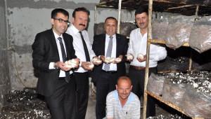 Boztaş; Manavgat'ın Mantar Üretimi Yapılan Tek Tesisi'ni Ziyaret Etti