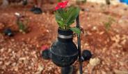 Biber Gazı Kapsülünde Çiçek Yetiştiriyor