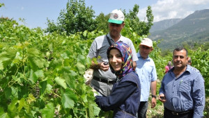 Çiftçilere Üzüm Yetiştiriciliği Eğitimi