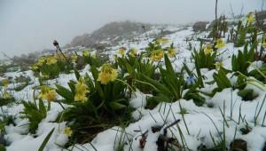 Posof'a Haziran Ayında Kar Yağdı