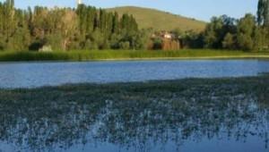 Seyfe Gölü Kelebeklere de Ev Sahipliği Yapıyor -