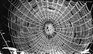 Örümcek Ağı, Askeri Zırh Olarak Kullanılacak