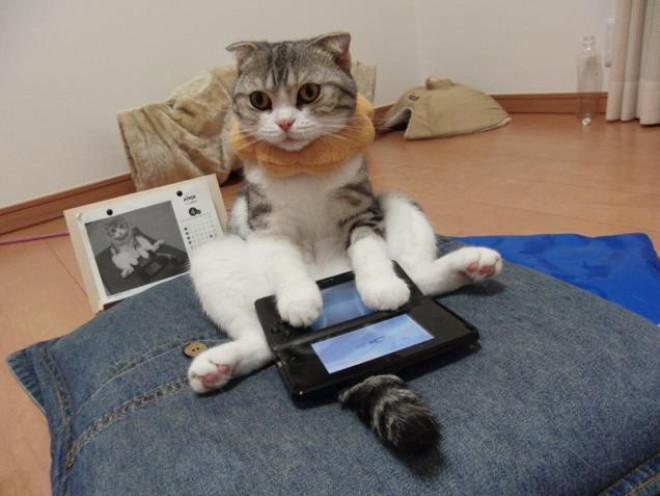 Kediler Video Oyunu Oynarken Nasıl Görünüyor?