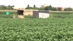 Bölge Çiftçisinden Sitem: Devlet Sanki Dedaş'ı Koruyor Gibi