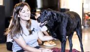 Köpek Duke'nin Ölmeden Önceki 'Mükemmel' Günü