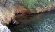 Bodrum'da Akdeniz Foku Görüntülendi