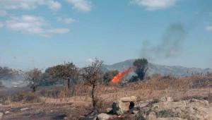 Alevler, Ezine'de 3 Hektar Tarım Arazisine Kül Etti