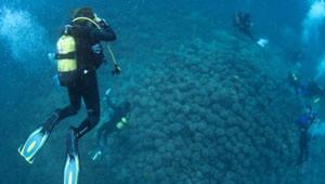 Ayvalık Sularında Bin Yıllık Tarih Yatıyor