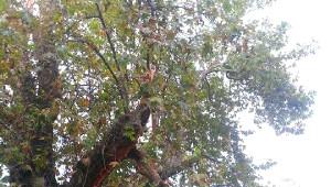 Şiddetli Yağış ve Fırtına Pamukova'da Etkili Oldu