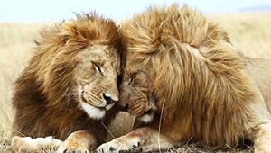 Vahşi Hayvanların Yüzde 52'sini Yok Ettik